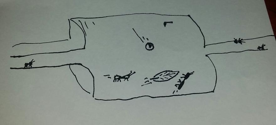 Ants in Space.jpg